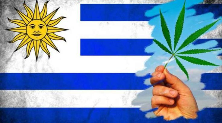 By Johnny Green From Weed News   Uruguay made history Wednesday July 19, 2017, by becoming the first country on the planet to allow completely legal marijuana sales. The idea of legalizing marijuana for adult use in Uruguay was first proposed by President José Mujica in 2012, and was approved by Uruguay's parliament in December 2013. There have been a lot of bumps... #legalize #mujica #uruguay