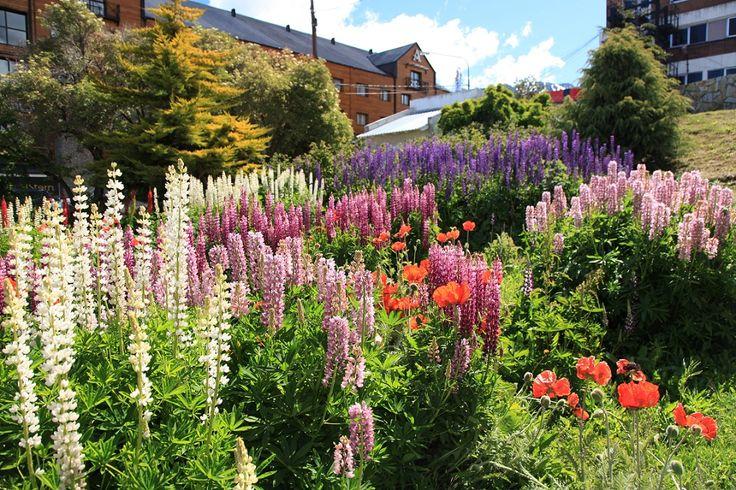 Jenis Bunga Untuk Taman Bunga Taman Flower Garden Organic Gardening Tips Purple Plants
