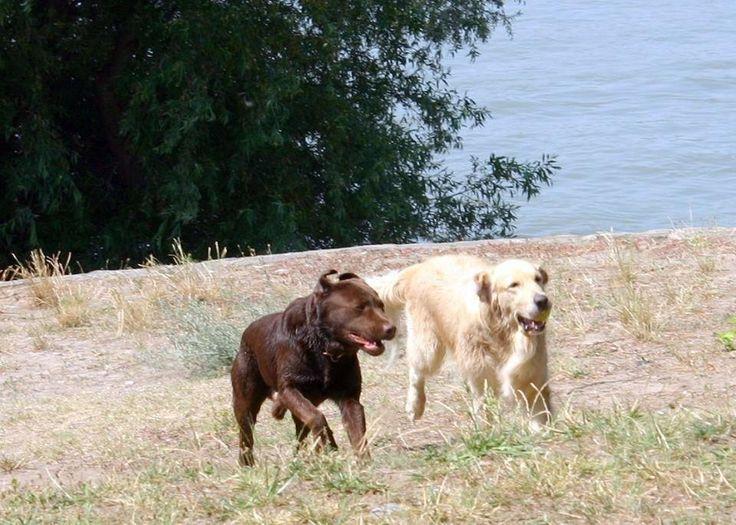 Kókusz és Drazsé a Marina parton