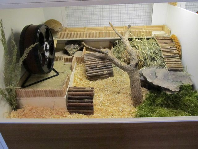 https://www.google.pl/search?q=hamster cage ideas