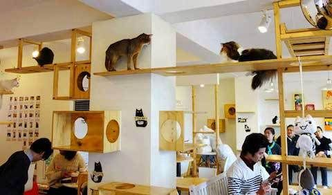 """Not long ago we introduced you to the concept of the cat café, and this Taiwan-based hangout continues the trend that has been popping up throughout China and Japan. Sometimes referred to as Neko cafés (neko meaning """"cat"""" in Japanese), the cat-tastic, caffeinated hubs offer city residents a place to enjoy feline companionship since apartment living is usually cramped, leaving no room for pets. The cafés are outfitted with permanent fixtures like catwalks, lookouts, and elevated perches."""