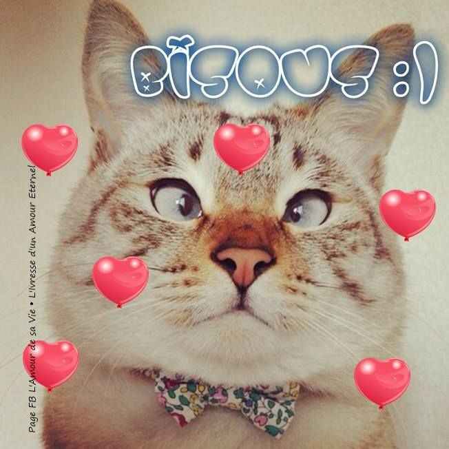 Bisous :) #bisous chats coeurs drole