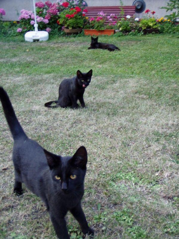 Tre gatti neri