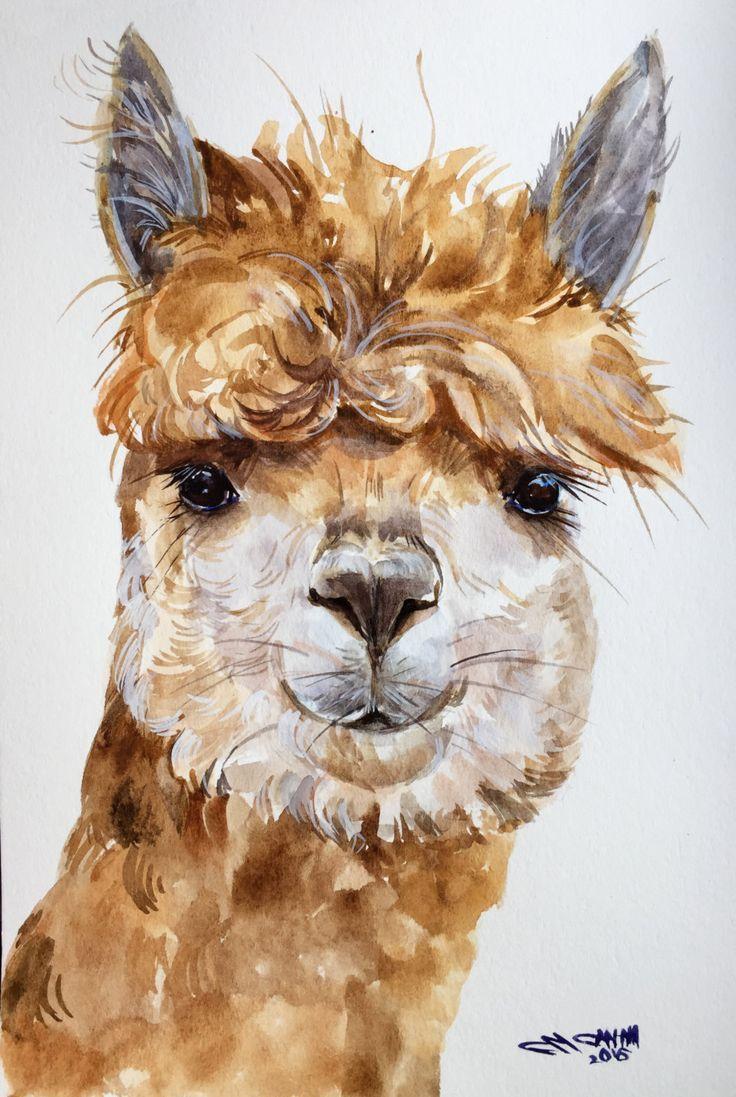 alpaca zeichnung