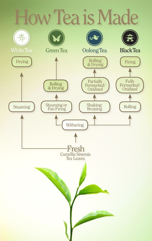 From the garden to the cup, each tea type reveals an exciting process.: