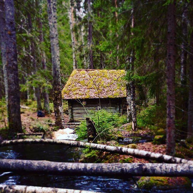 Finnish nature during spring time. Part 9 #finland #nature  #spring #beautiful #suomenkevät #luonto #luontokuva #kaunista #aamu #winled #winledlighting #woodland #metsä #suomi #suomenluonto #kevät #koski #puro #metsäretki #metsässä #mylly #forest #myllykoski #seitseminen