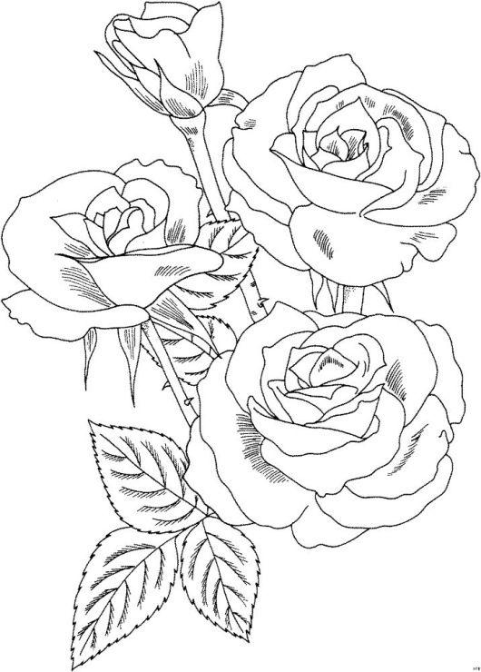Рисунки цветов карандашом на открытку овощной притих