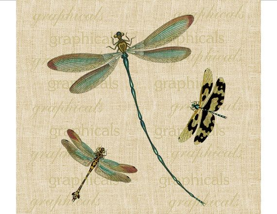 Vintage teal dragonflies insects Digital download graphic image for iron on fabric transfer burlap decoupage pillows papercraft No. 1746. $1.00, via Etsy.