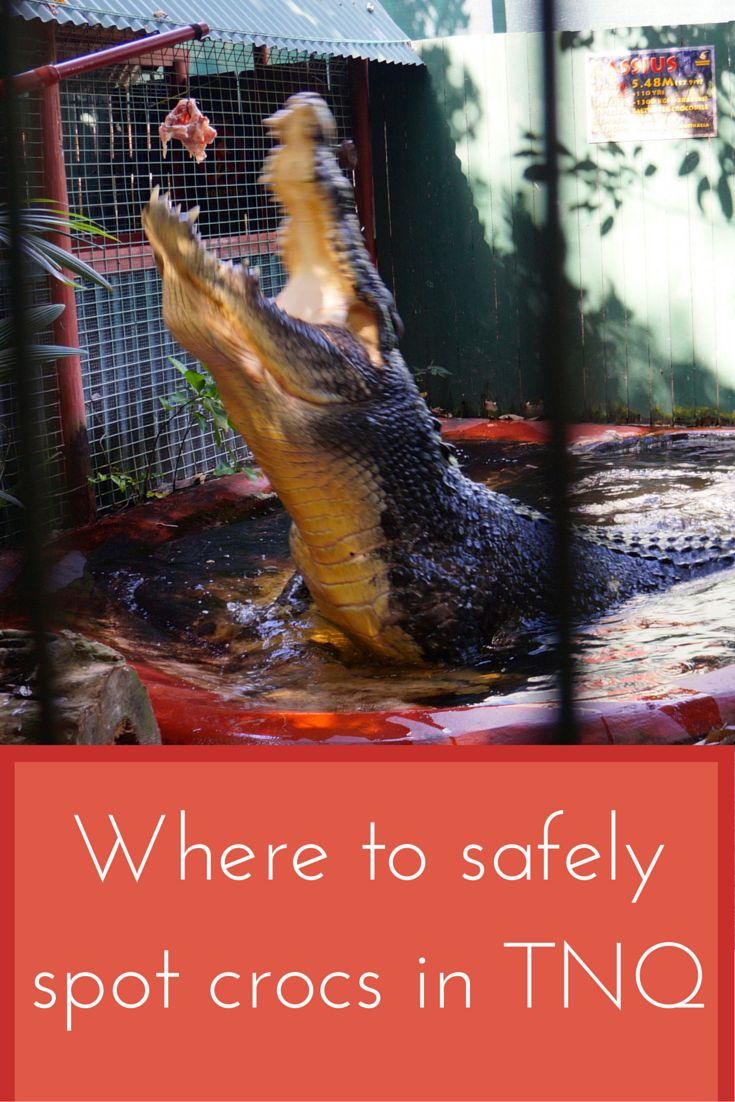 Eek - you might want to spot a crocodile but you certainly want to do it from a safe vantage point! Here are the best places to do that in Cairns and Tropical North Queensland...