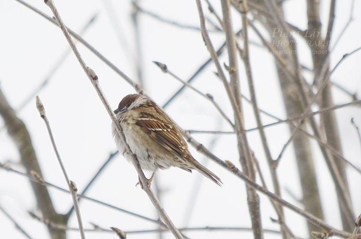Little birds <3