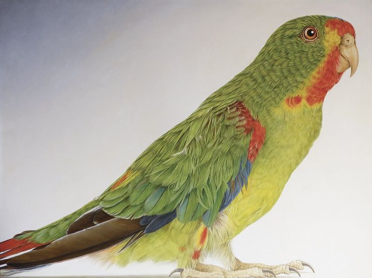 Critically endangered swift parrot, another fabulous work by Janet Luxton. See this show! http://www.australiangalleries.com.au/exhibitions/every-one-