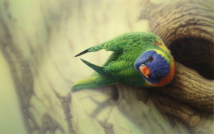 Rainbow Lorikeet by Christopher Pope