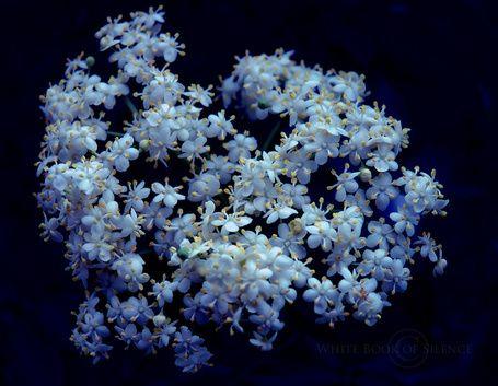 Светло - голубые цветы на черном фоне