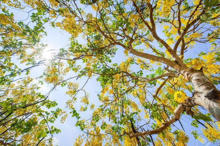 herbal plant of Sri Lanka Ayurvedic plant  medicinal plant