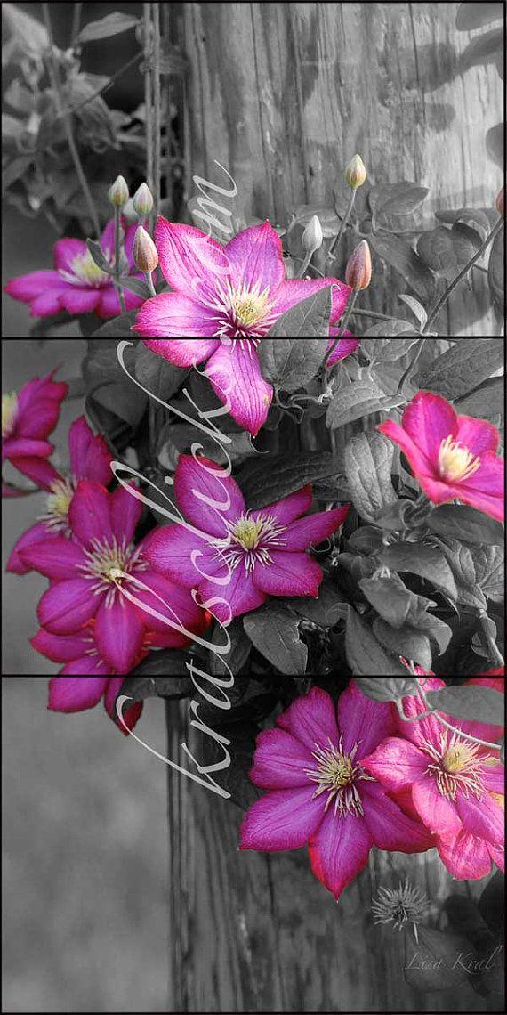 Pink Flowers Photographs, 3 piece set, Fine Art