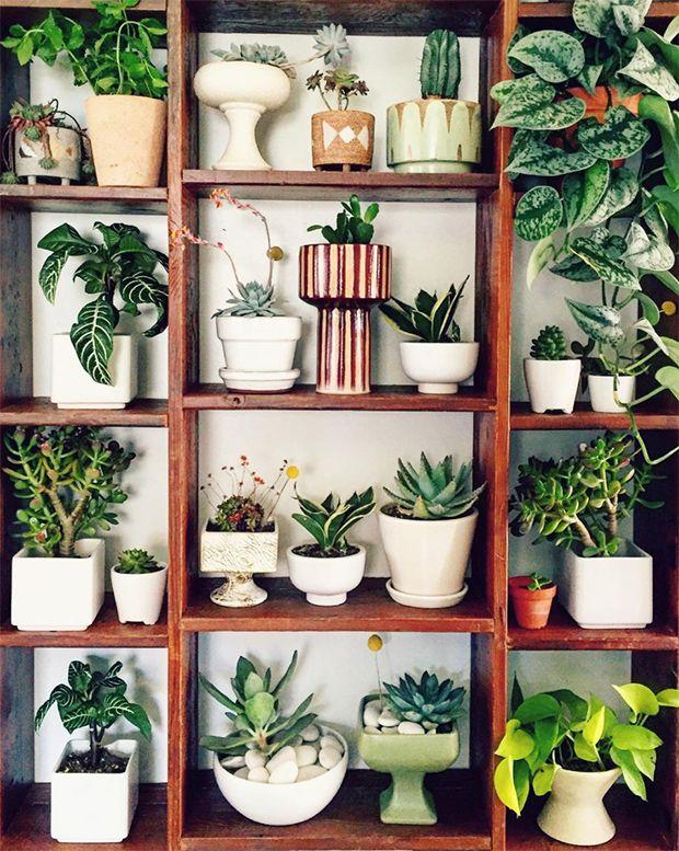 Best 569 Plants Indoor Hanging Diy Pots Images On 400 x 300