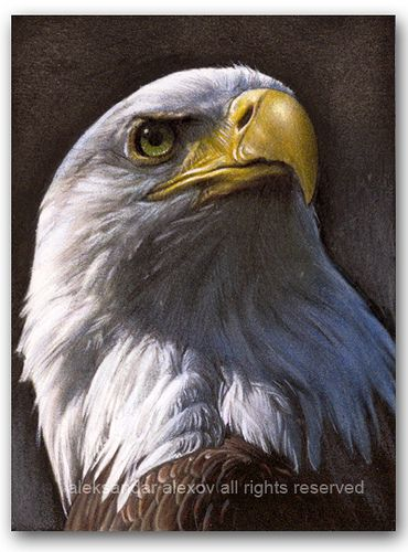 Bald Eagle ~ Artist: Aleksandar Alexov~ Watercolour,Artwork Mixed With Acrylic And Pencil