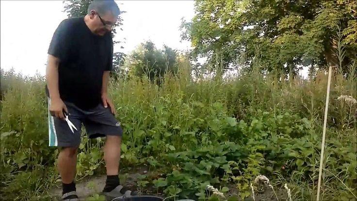 Patrol tanya - földieper növenyvedelme Julius