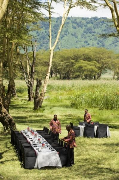 Wedding Safari