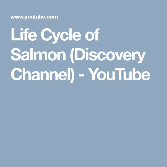 Life Cycle of Salmon (Discovery Channel) - YouTube