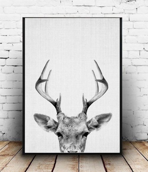 Best 25+ White deer heads ideas on Pinterest | Faux deer ...