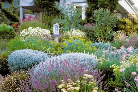 Create a Water-Wise Herb Garden—Yarrow, society garlic, sage, lavender and santolina keep their good looks even when weather turns dry.