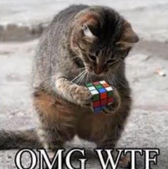 dronken kat - Google zoeken