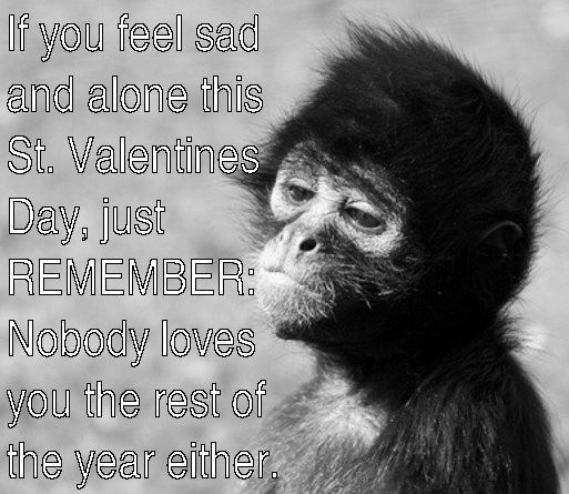 monkey meme of horrible message for Valentines Day