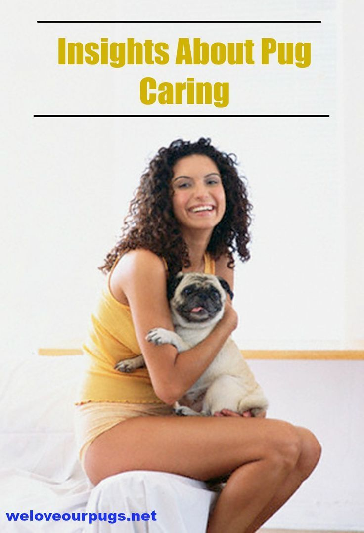 Are you unsure of what to feed your pug ? If you give your pug the wrong food, it will show. Your pug will either be underweight or overweight depending on its diet. Table scraps are not good enough for the pug. Give your pug a proper diet using the following pet care tips.  | pug care  | Pug Facts