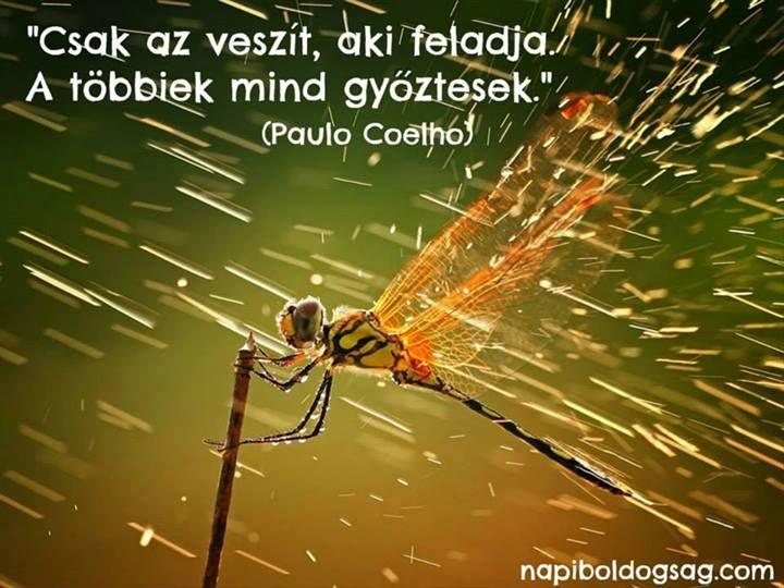 Coelho idézete a kitartásról. A kép forrása: Napi Boldogság # Facebook