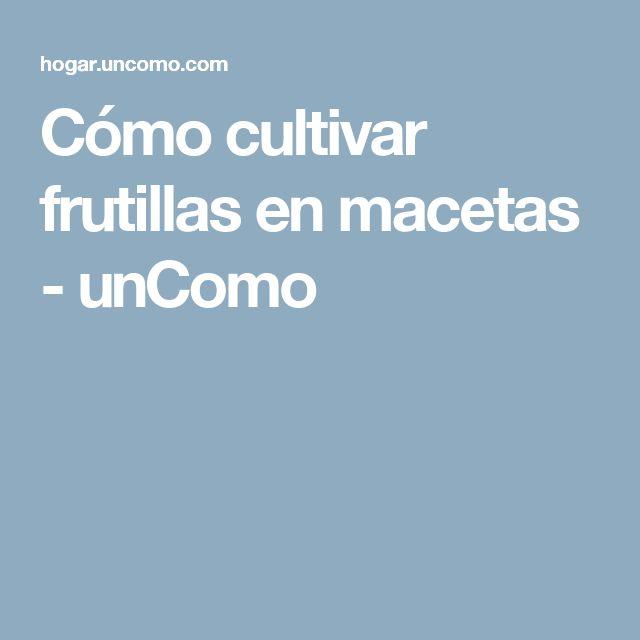 Cómo cultivar frutillas en macetas - unComo