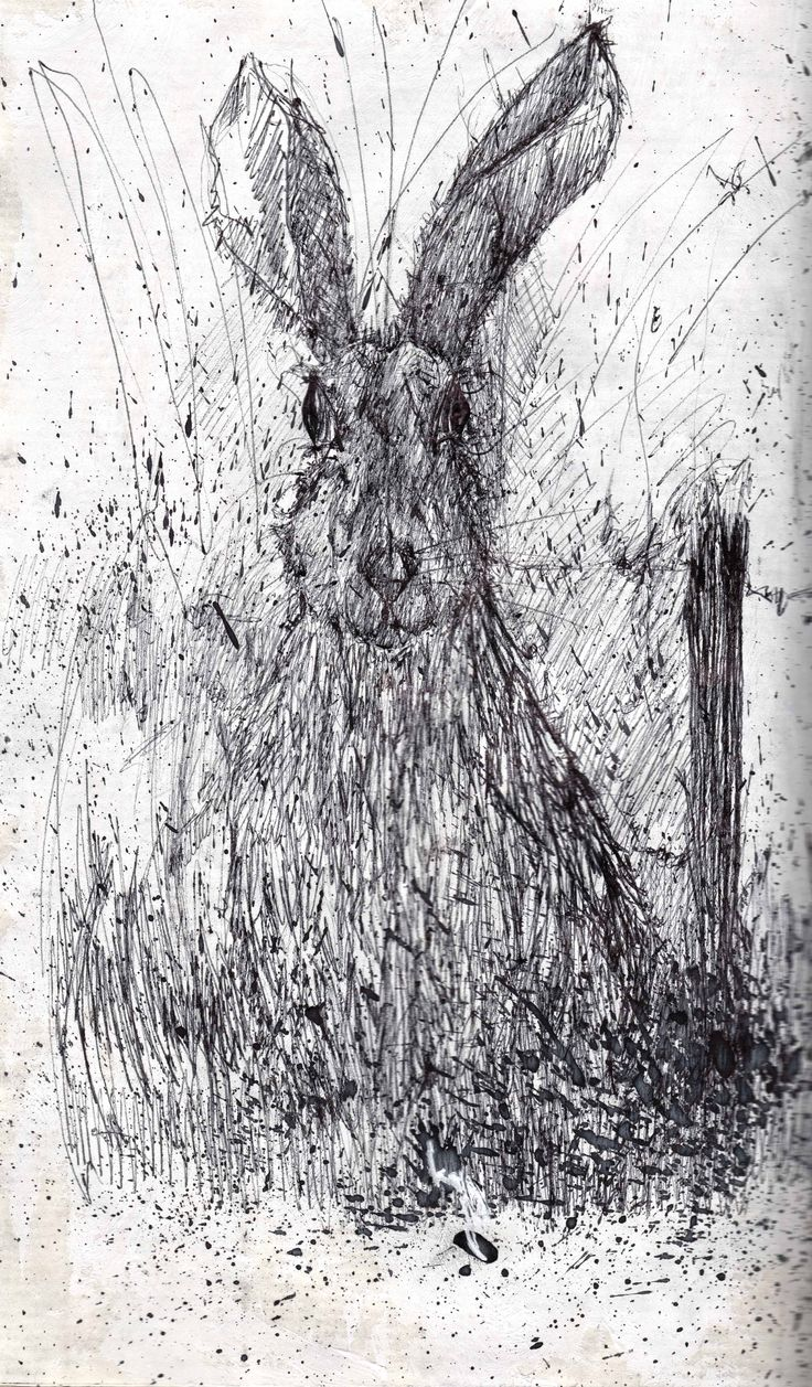 Pen drawing of hare.