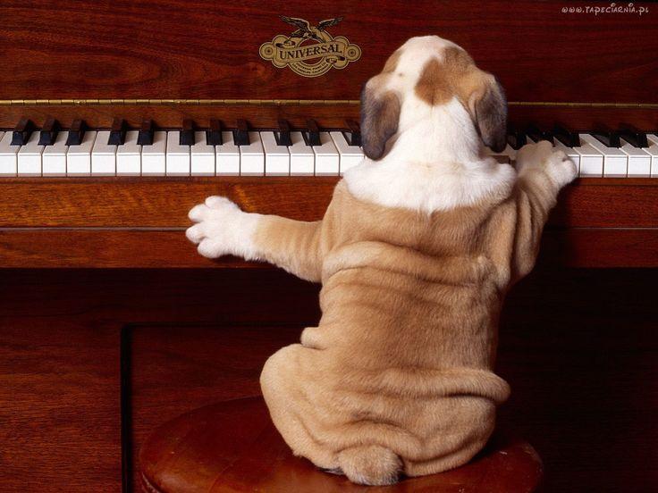 Śmieszne, Pies, Fortepian