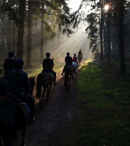 Maak een heerlijke trektocht eigen paard door de uitgestrekte bossen van Drenthe. Alles is helemaal verzorgd, jij hoeft alleen maar op pad te gaan!