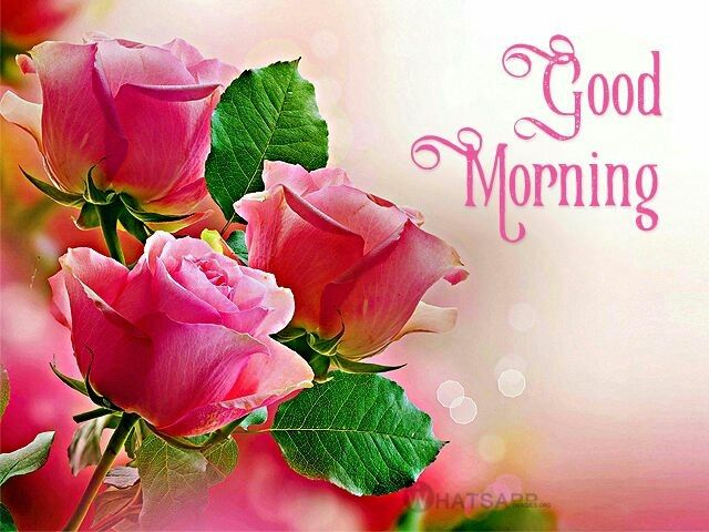 Best 25+ Morning greetings quotes ideas on Pinterest | Good ...