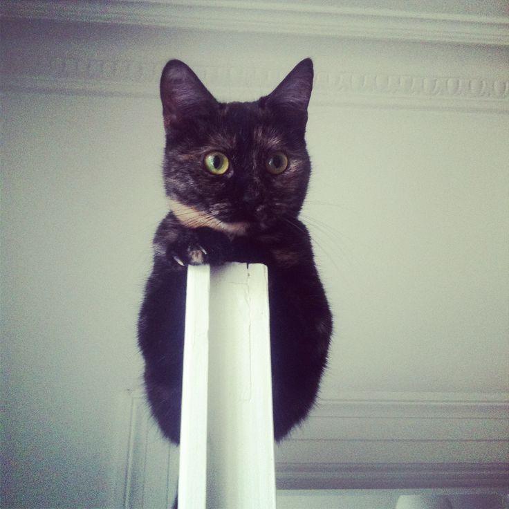 Alba on the door