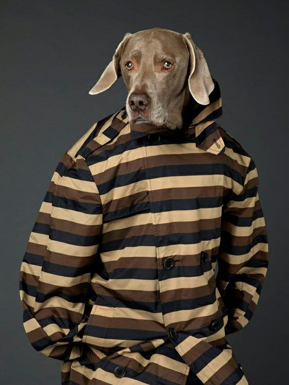 Dogy Style / Man About Town Mag SS012  #menswear #dogs #prada