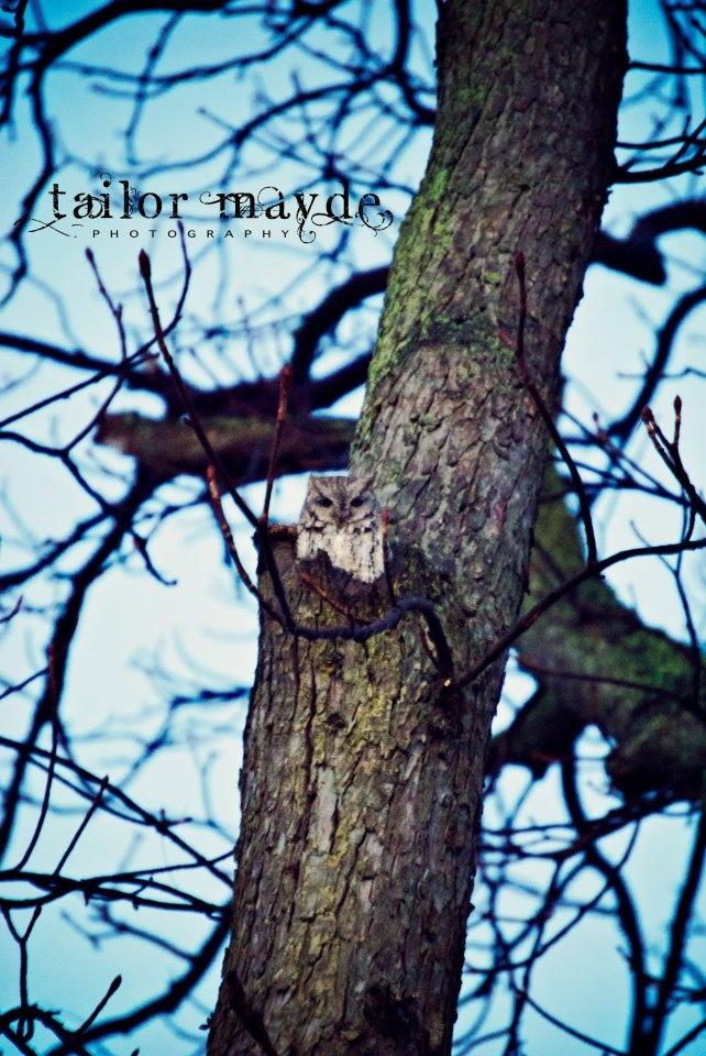 Owl, nature, tree, creepy: Photos, Creepy, Animals, Nature, Owl, Trees, Favorites, Photography