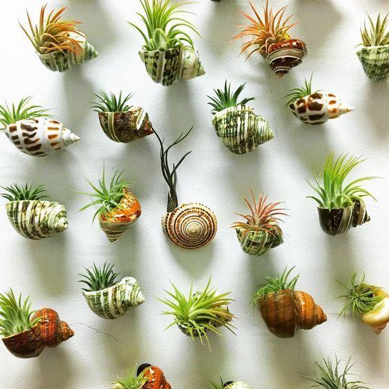 Erstelle einen kleinen Pflanzer in einer Muschel! …