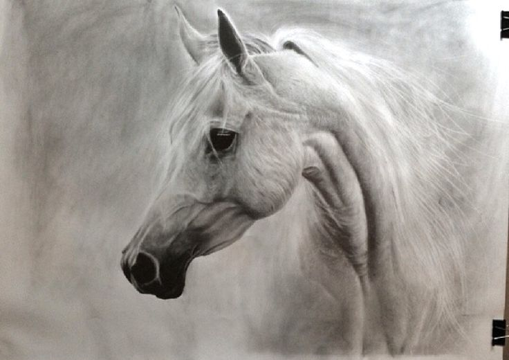 Horse drawing by pencil
