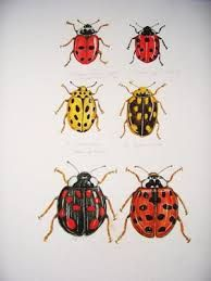 Ladybird drawings - Google Search