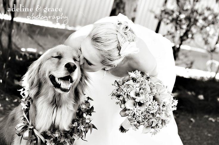 28 Fotos de cães em casamentos - Eu sou completamente apaixonada pelo meu cachorro, o Mike! Ele é o mais lindo do mundo!! rs Não adianta, quem ama seu bichinho de estimação e trata como membro da família deve sentir o mesmo que eu…