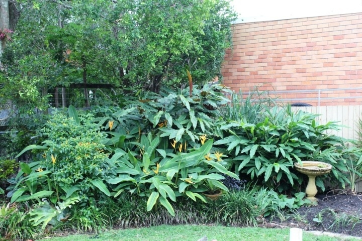 The matured part of my garden