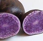 Kartoffelsorter: Blå Kongo - Tidlig sort