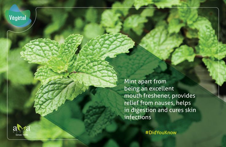 #DidYouKnow - #Mint apart from being an excellent mouth freshener, provides relief from nauses, helps in digestion and cures skin infections. #Vegetal Products are 100% #Natural Extracts Love #Nature. Buy Natural