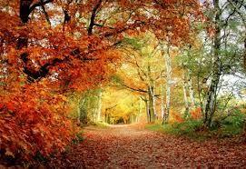 Resultado de imagen para imagenes gratis de paisajes con caminos