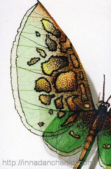 Бабочки из скелетированных листьев Надежды Руденко