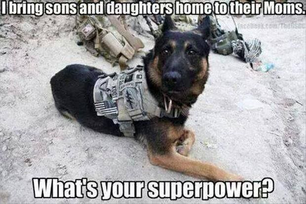 Military working dogs helping to bring home our troops!