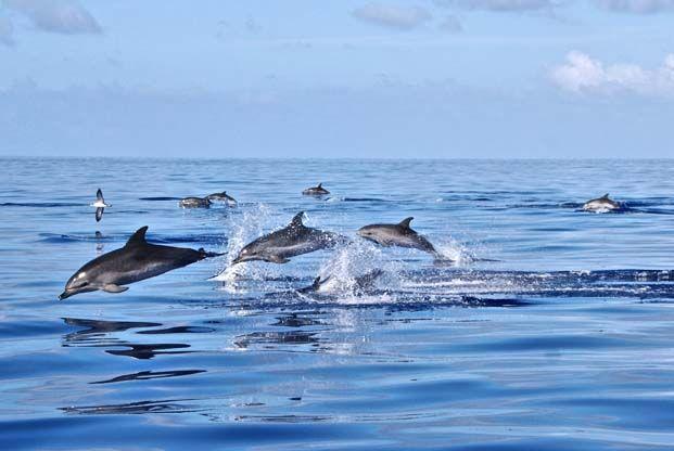 Randonnée #Madère, #dauphins - La Balaguère