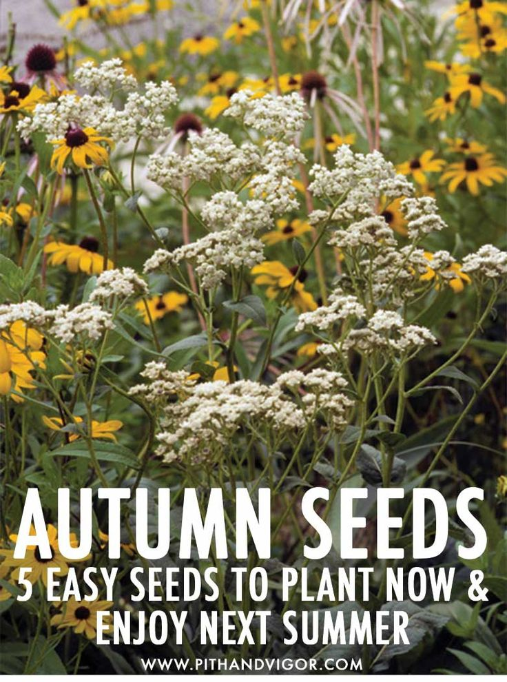 104300 Best Great Gardens Ideas Images On Pinterest